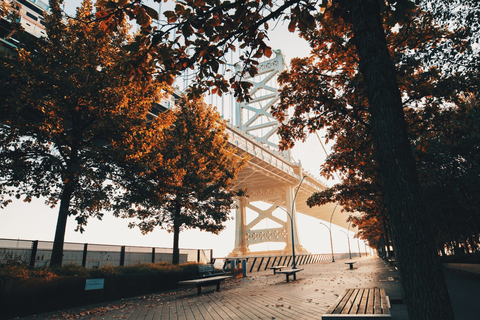 Philadelphia Bridge Trees